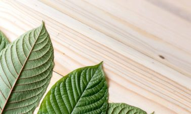 5 Greatest Facts About Kratom You Need To Know Right Now!