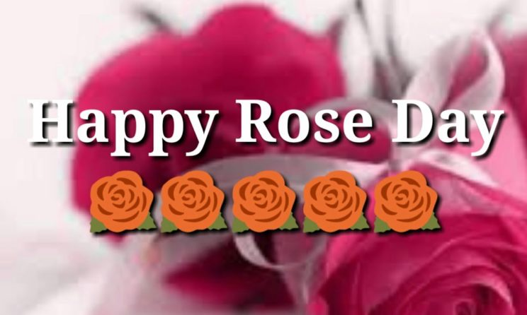 Happy Rose Day 2019: Collections Of Rose Day Wishes, Message & Quotes