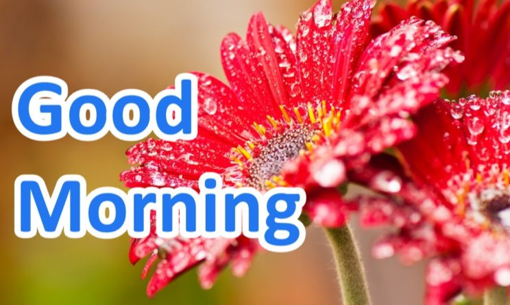 Here Are Best Good Morning Messages, Wishes & Quotes You May Share Now!