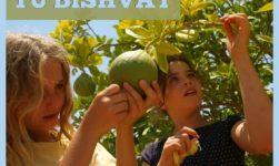 Tu Bishvat (15 Shevat): Origin And Celebration Of The Jewish Tree Holiday