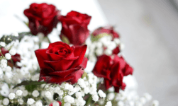 Valentine's Week Days 2020 Quotes, Status, Wishes, Messages, Images & HD Card