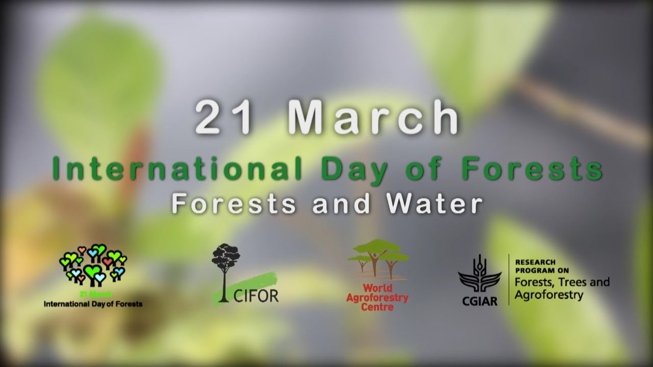 International Day of Forests 2019 : Some Facts About Forests You Need To Know!
