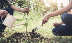 Arbor Day 2019: Origin, History, Celebration And Quotes