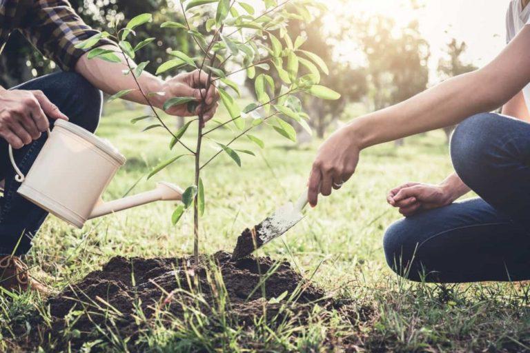 Arbor Day 2019: Origin, History, Celebration And Quotes