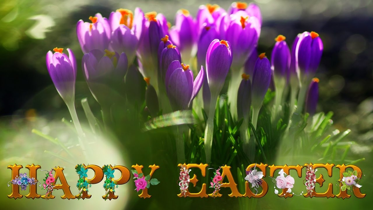 Happy Easter Images, Wallpaper, Easter Sunday pictures for Whatsapp DP and status 2019