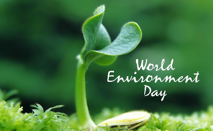 World Environment Day 2019 Messages, Wishes, Greetings, Slogan, Pictures & Images