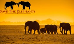 World Elephant Day 2019: Date, Importance, Celebration, Threats And Solution